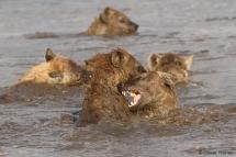 Spiel im Wasser