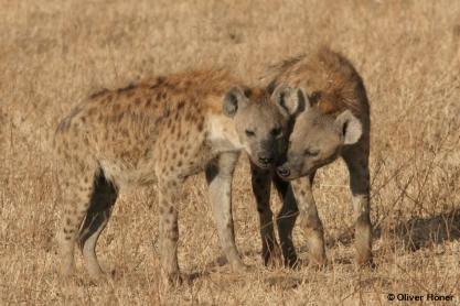 Männchen kuschelt mit Weibchen