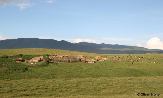 Massai-Boma mit Rindern, Ziegen und Schafen