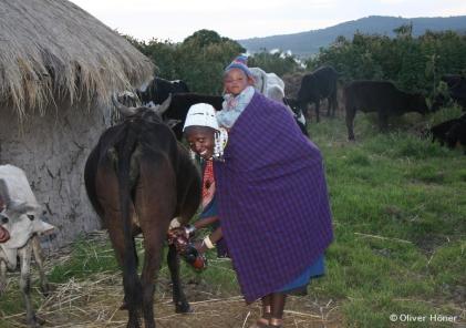 Massai-Frau beim Melken in ihrem Dorf
